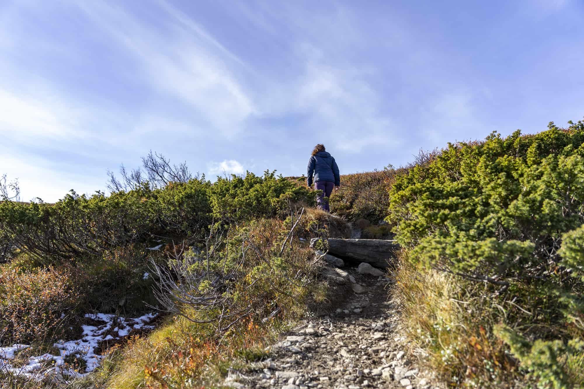 Turstier i Synnfjell